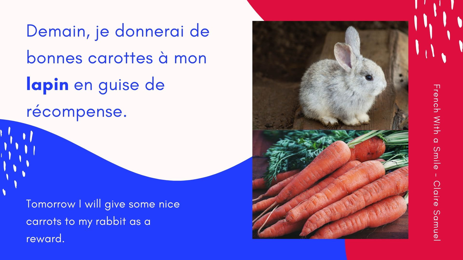 Intermediate #Animals #vocabulary with sentences in #French